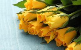 Bouquet of yellow roses on blue background