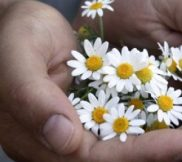 Svaka boljka ima svoju biljku! – Balkanske cvetne esencije